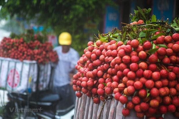 Nhat Ban chinh thuc mo cua co dieu kien cho vai thieu Viet Nam hinh anh 1