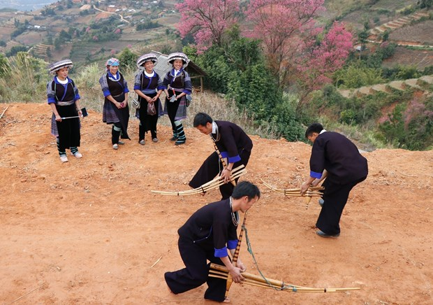Ruc ro sac hoa dao rung o vung reo cao Tay Bac Mu Cang Chai hinh anh 3