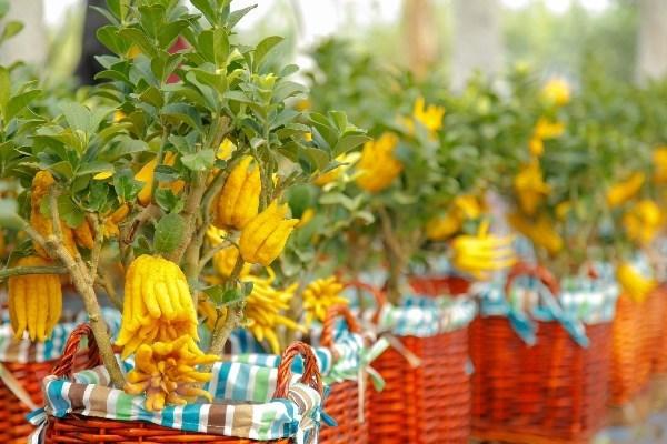 Nguoi Viet bo 18 trieu USD nhap hoa, cay canh truoc Tet Nguyen dan hinh anh 1