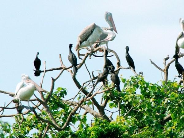 Vuon chim Bac Lieu nguy co chay rung cuc cao hinh anh 1