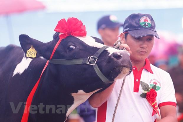 [Photo] Tung bung cuoc thi Hoa hau bo sua Moc Chau 2016 hinh anh 3