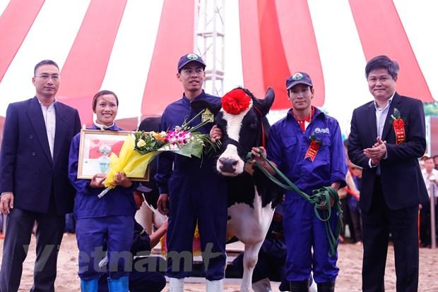 [Photo] Tung bung cuoc thi Hoa hau bo sua Moc Chau 2016 hinh anh 8