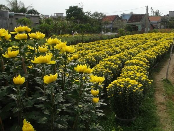 Cac lang hoa san sang cung ung cho thi truong Tet hinh anh 1