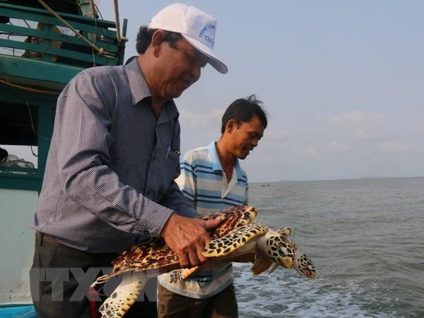 Kien Giang: Tha hon 530.000 con giong tai tao nguon loi thuy san hinh anh 1