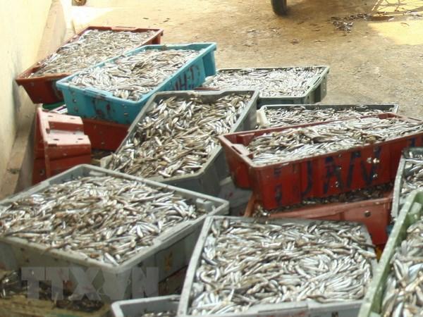 Hai san Quang Binh gia tang cao van chay hang trong dip le hinh anh 1