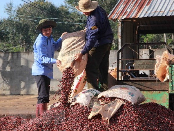 "Dak Lak bao ho nhan hieu ""Buon Ma Thuot Coffee"" tren the gioi hinh anh 1"