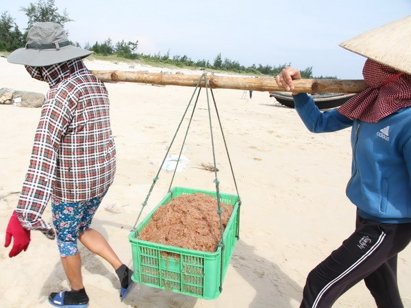 Thoi tiet thuan loi, ngu dan Quang Tri duoc mua ruoc bien hinh anh 1