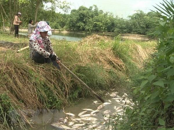 Dieu tra nguyen nhan khien ca chet hang loat tai Quang Ngai hinh anh 1