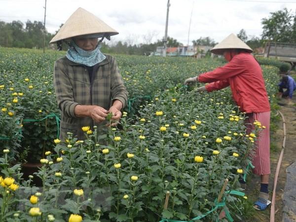 Thoi tiet thuan loi, nguoi trong hoa Da Nang duoc mua hoa Tet hinh anh 1