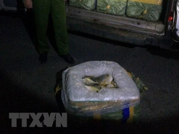 Quang Ninh: Tieu huy hon 3,5 tan ca khong co giay to nguon goc hinh anh 1