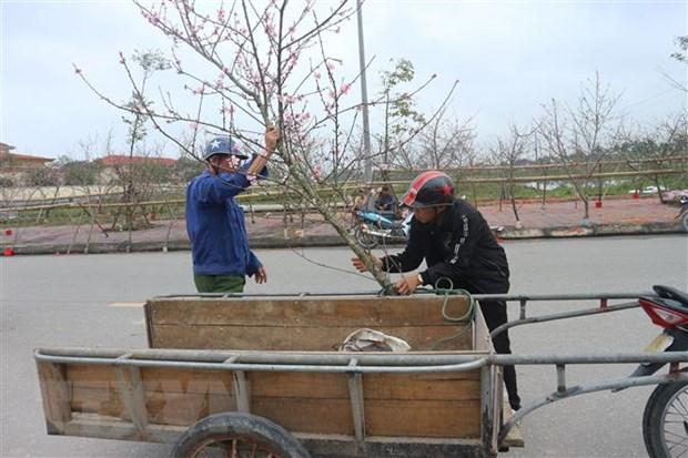 Mien Bac co mua Xuan trong dem Giao thua Tet Ky Hoi 2019 hinh anh 1