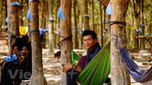 Hieu qua tu du an trong cay cao su cua Viet Nam tai Campuchia hinh anh 4