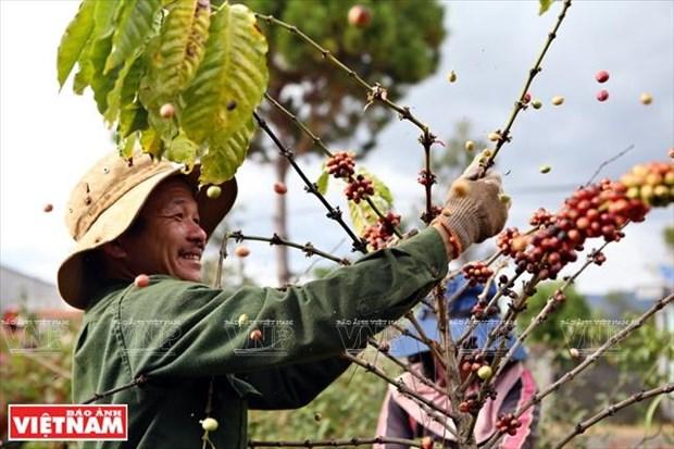 Gia Lai: Ve mien hoang da cung van hoa Tay Nguyen hinh anh 13