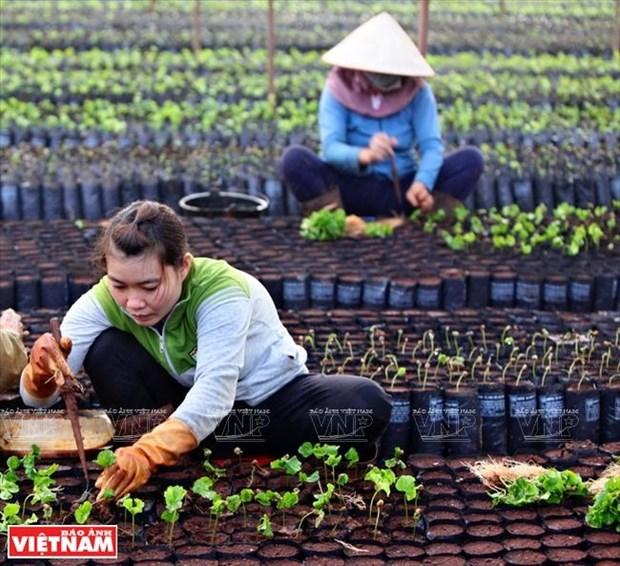 Gia Lai: Ve mien hoang da cung van hoa Tay Nguyen hinh anh 9