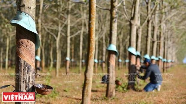 Gia Lai: Ve mien hoang da cung van hoa Tay Nguyen hinh anh 15