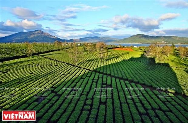 Gia Lai: Ve mien hoang da cung van hoa Tay Nguyen hinh anh 16