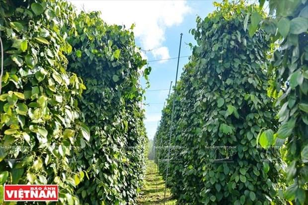 Gia Lai: Ve mien hoang da cung van hoa Tay Nguyen hinh anh 14