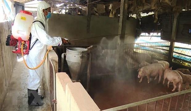 Phun thuốc tiêu độc khử trùng khu vực có ổ dịch tả lợn châu Phi ở xã Hương An, thị xã Hương Trà. (Ảnh: Hồ Cầu/TTXVN)