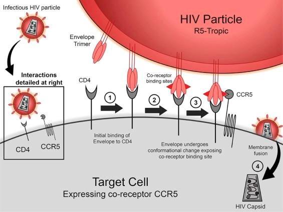 Phat hien dot bien gene thu hai lien quan den kha nang khang HIV hinh anh 1
