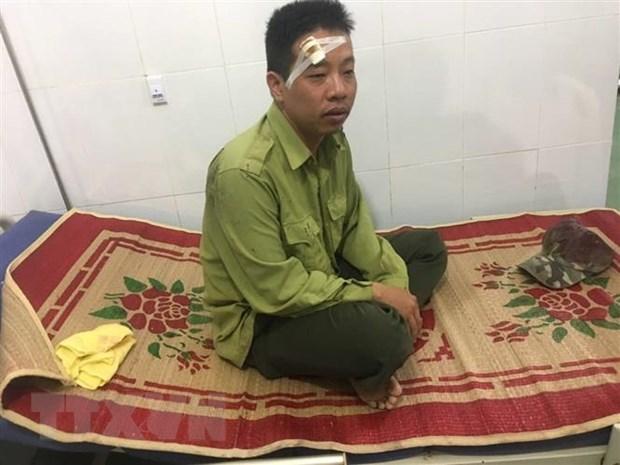 Dak Lak: Them mot vu hanh hung kiem lam Vuon quoc gia Yok Don hinh anh 1