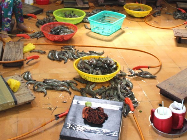 Xu ly 1 doi tuong thu gom 600kg tom nguyen lieu co chua tap chat hinh anh 1