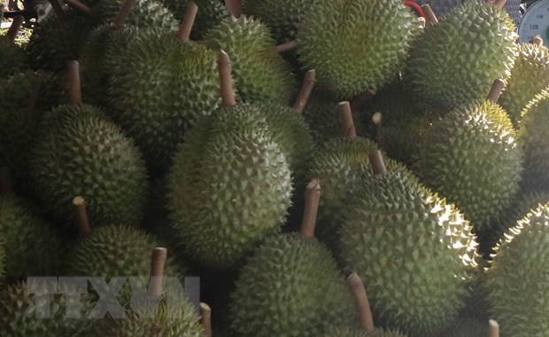 Dak Lak: Chu vua sau rieng phan doi to cong tac chong that thu thue hinh anh 1