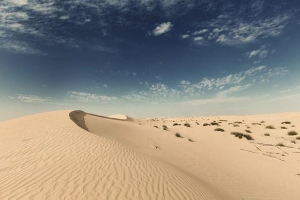 Canh bao nguy co chau Au chim trong bui tu sa mac Sahara hinh anh 1