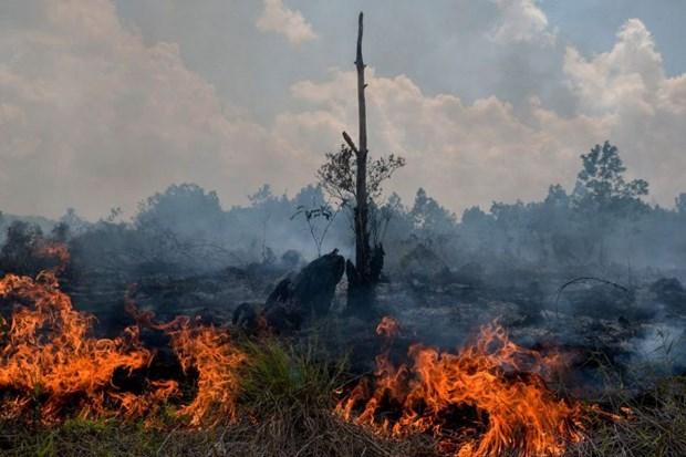 Indonesia ban bo tinh trang khan cap do chay rung dang lan rong hinh anh 1