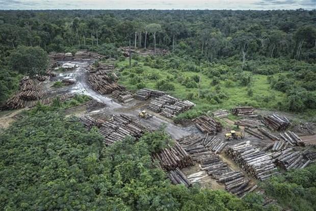 Brazil: Rung Amazon tai khu Xingu dang bi tan pha nang ne hinh anh 1