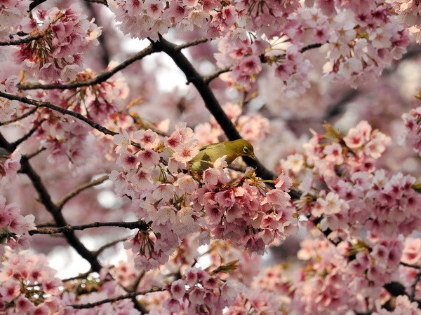 So nguoi di ung phan hoa o Nhat Ban tang dot bien hinh anh 1