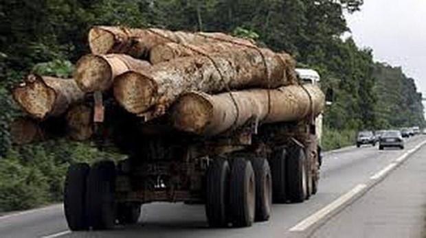 Gabon: Pho tong thong bi sa thai sau be boi go quy 'mat tich' hinh anh 1
