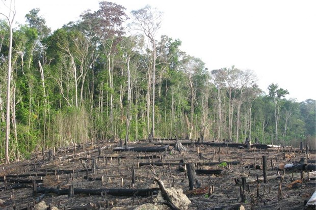 Brazil: 'La phoi xanh' Amazon dang bi tan pha o muc bao dong hinh anh 1