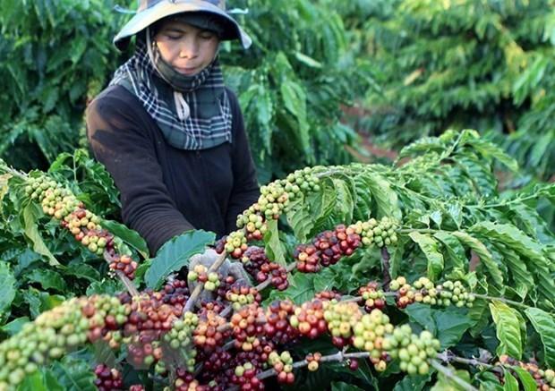 Viet Nam-An Do co tiem nang lon trong hop tac xuat khau nong san hinh anh 2
