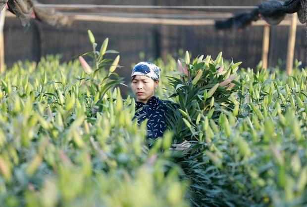 Nguoi trong rau xanh, hoa tuoi cua Ha Noi kem vui vi e am hinh anh 1