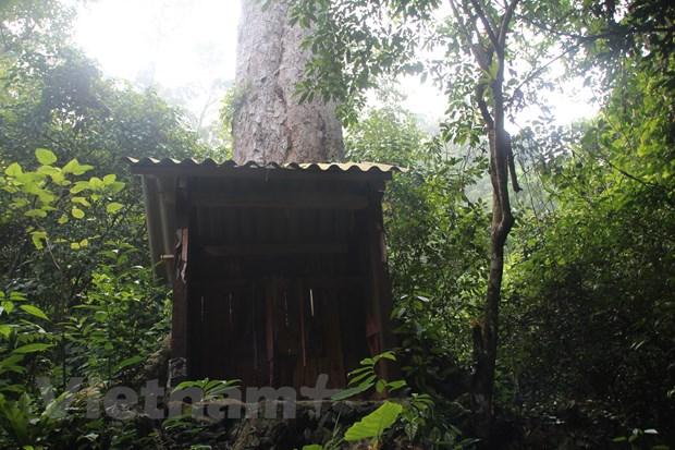 [Photo] Rung nghien co thu bi