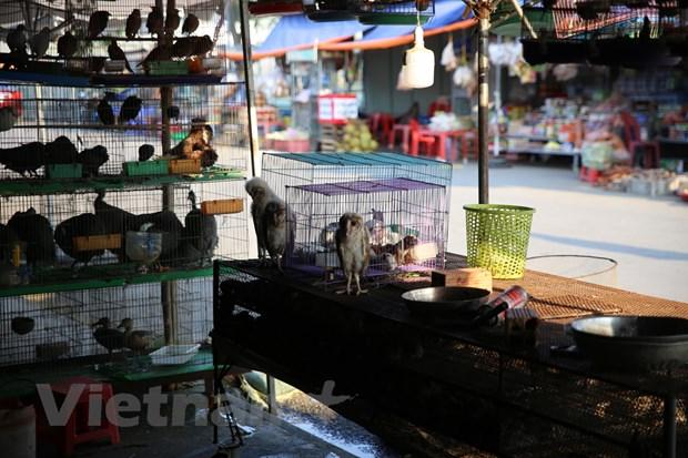 Chong dich Covid-19: Cuc Kiem lam truy quet cho chim lon nhat nuoc hinh anh 6