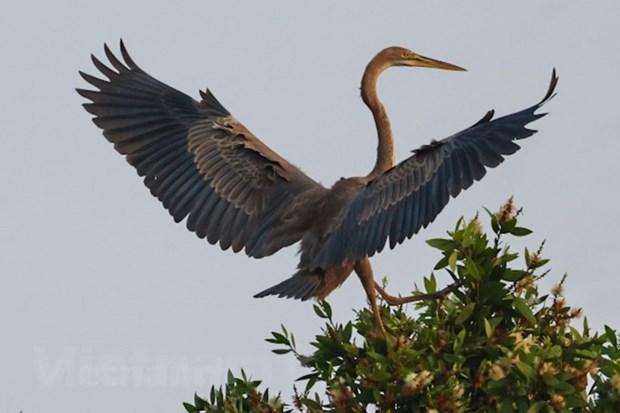 Vườn quốc gia Tràm Chim có hơn 198 loài chim nước, chiếm khoảng 1/4 số loài chim có ở Việt Nam. (Ảnh: Hải An/Vietnam+)
