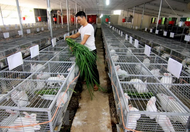 FAO: Ket qua xoa doi giam ngheo cua Viet Nam se con tot hon nua hinh anh 2