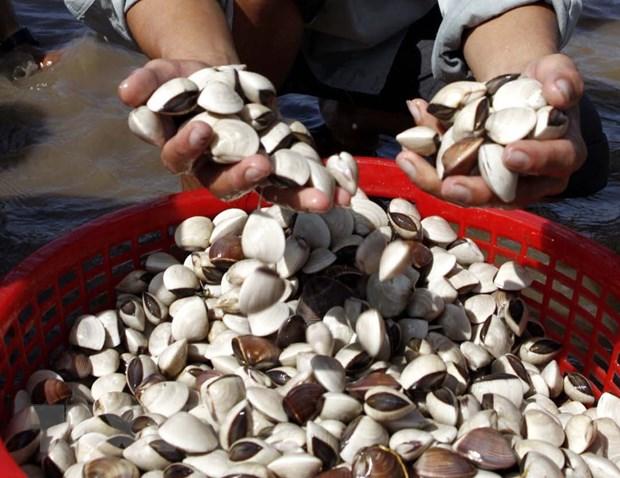 Binh Thuan cam danh bat cac loai hai dac san trong mua sinh san hinh anh 1