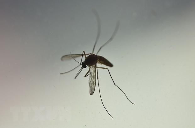 My: Bang Texas phat hien ca dau tien nhiem Zika trong nuoc hinh anh 1