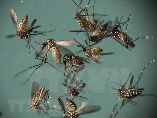 Mot phu nu Han Quoc nhiem virus Zika sau khi du lich Thai Lan hinh anh 1