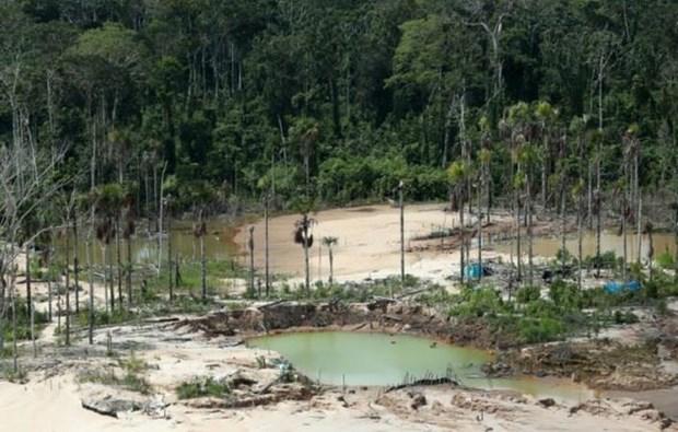 Peru lap can cu quan su tai Amazon de doi pho nan pha rung hinh anh 1