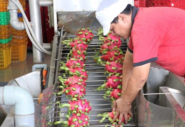 Dong hanh cung nong san Viet chinh phuc thi truong the gioi hinh anh 1