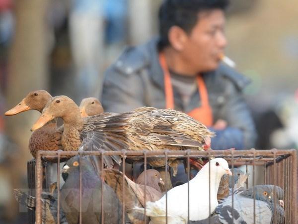 Trung Quoc phat hien them 6 ca nhiem virus cum gia cam H7N9 hinh anh 1