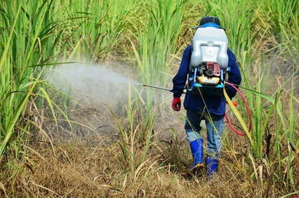 Greenpeace kien mot Bo truong Ba Lan cho dung thuoc tru sau bi cam hinh anh 1