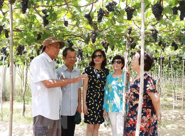 Luong khach den Ninh Thuan dip nghi le tang gap 3 lan nam ngoai hinh anh 1