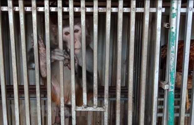 Tang cuong hanh dong nham giam thieu vi pham ve dong vat hoang da hinh anh 2