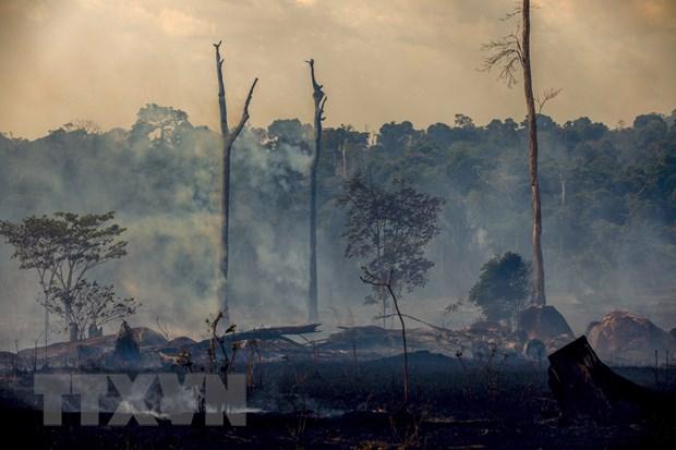 Brazil: So vu chay tai rung Amazon giam ky luc trong thang 10 hinh anh 1