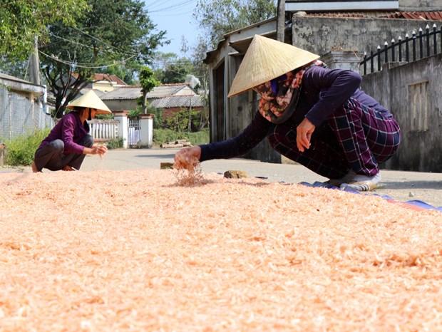 Ngu dan Quang Ngai phan khoi vi trung mua ruoc bien hinh anh 2