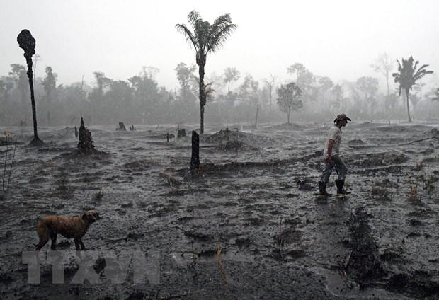 Brazil trien khai gan 4.000 binh sy ngan chan nan pha rung Amazon hinh anh 1